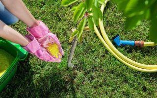 Удобрения для деревьев и кустарников — весной и осенью