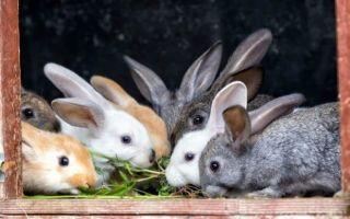 Помет кроликов как удобрение для огорода