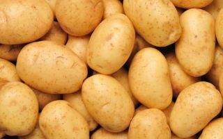 Лучшее удобрение для картофеля, что использовать и как применять?