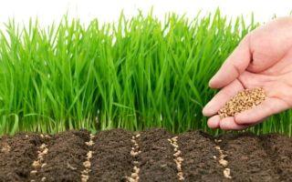 Сидераты как удобрение — какие бывают, когда и как правильно использовать