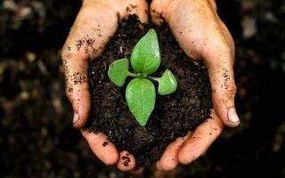 Как на дачном участке сделать почву плодородной?
