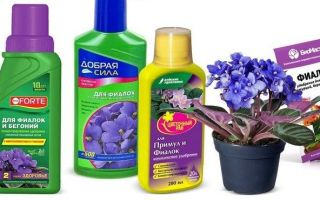 Удобрение для фиалок — уход за цветком в домашних условиях