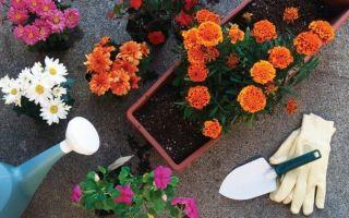 Комплексные эффективные подкормки для домашних цветов