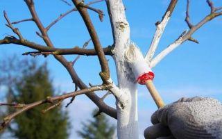 Подготовка яблони к зимовке — обрезка, подкормка и утепление