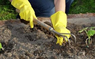 Подготовка почвы под огурцы — в теплице и открытом грунте