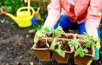 Чем подкармливать растения и овощи в весенний период?