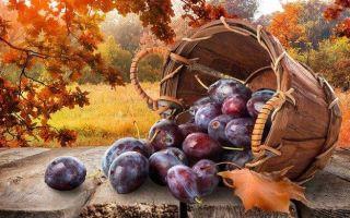 Чем подкормить сливу осенью?