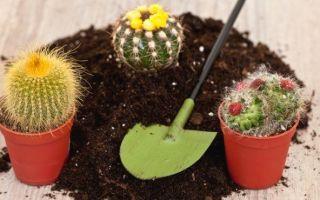 Почва для комнатного кактуса — как выбрать, советы кактусоводам