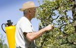 Опрыскивание яблони карбамидом осенью, как производится?