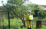 Чем обработать яблоню осенью, как правильно это сделать?