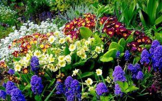 Подкормка многолетних цветов, какие удобрения вносят под цветы