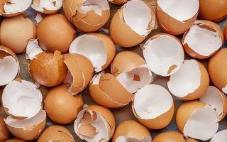 Скорлупа от яиц как удобрение для огорода и комнатных растений
