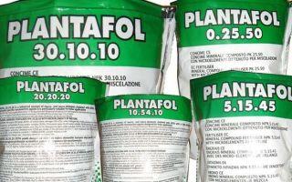 Удобрение «Плантафол», как правильно использовать?