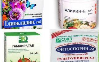 Применение фунгицидов, список популярных препаратов