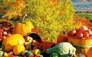 Какие удобрения вносить осенью под перекопку — осенняя подкормка сада и огорода