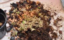 Какую почву любит антуриум, необходимый состав грунта