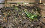 Ботва растений как удобрение, можно ли и как правильно применять?