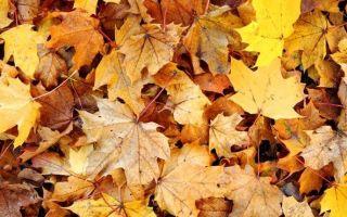 Листья с деревьев как удобрение для огорода