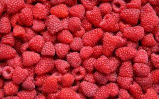 Удобрения для малины — весной и осенью, при посадке и после сбора урожая