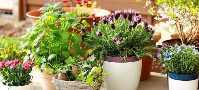 Удобрения комнатных растений народными средствами