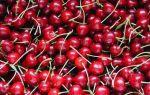 Удобрения для черешни, что использовать и как вносить осенью?