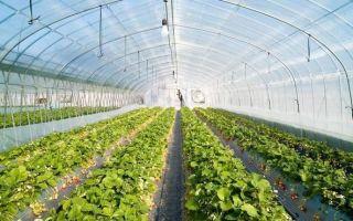 Подготовка почвы в теплице осенью — обеззараживание, обработка от вредителей и болезней