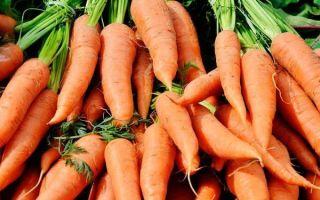 Подкормка моркови, популярные и эффективные удобрения