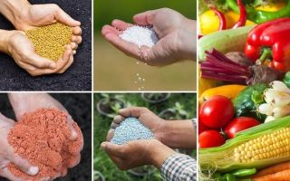 Удобрения и подкормки — что это и зачем они нужны?