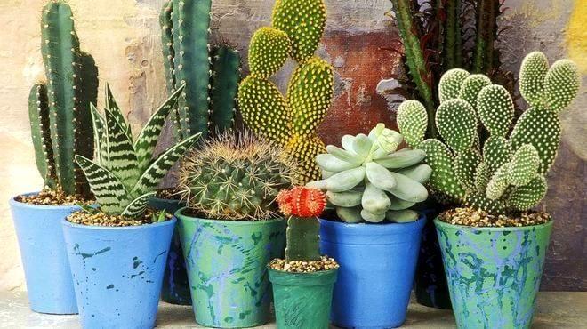 kaktusy-i-sukkulenty-660x370