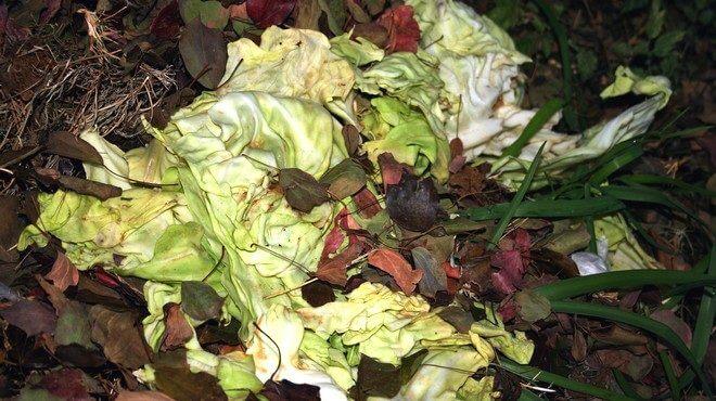 kompost-iz-kapusty-660x370