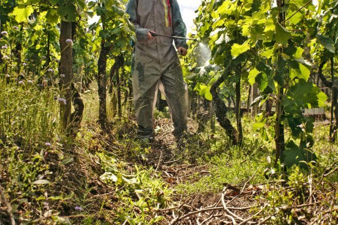 opryskivanie-vinograda-1-660x440