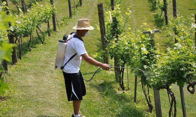 opryskivanie-vinograda-e1514285049542-660x392