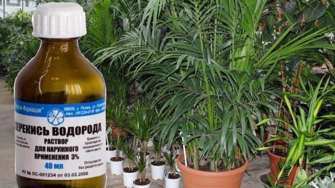 можно ли удобрять рассаду перекисью водорода