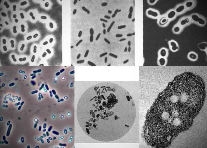 bakterialnye-udobreniya-660x473