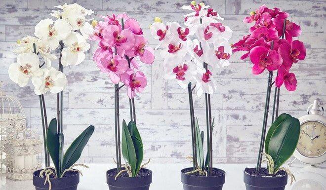 Подкормка орхидей в домашних условиях: удобрения для цветения