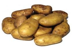 kartofel-m