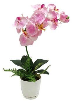 orhideya-v-gorshke-m