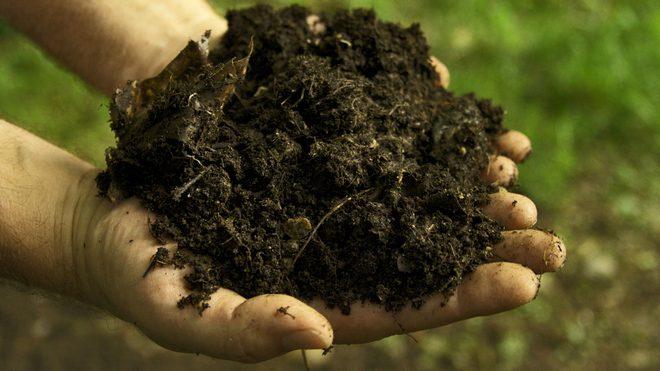 Как обеззаразить землю перед посадкой рассады