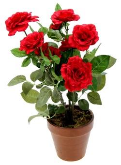 roza-v-gorshke-m
