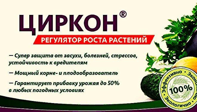tsirkon-660x376