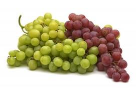 vinograd-m